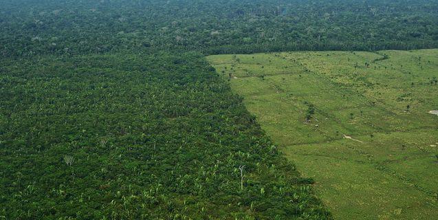 Estudo mostra que regeneração natural de florestas é menor do que se pensava
